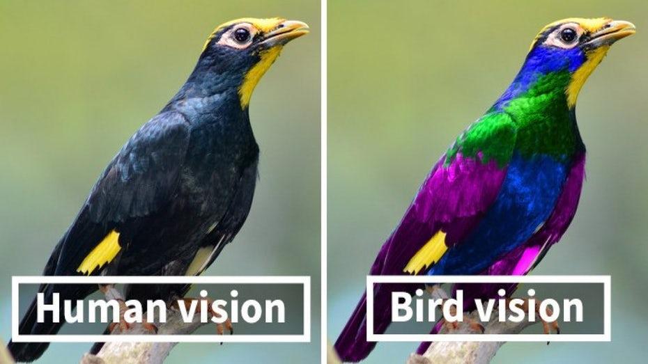 تفاوت دید پرندگان و انسان