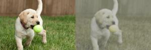 تفاوت دید چشم انسان و سگ